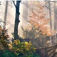 fog-morning